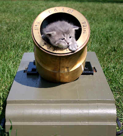 Coehorn Mortar Cat Hunting